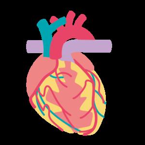 心臓・呼吸器科